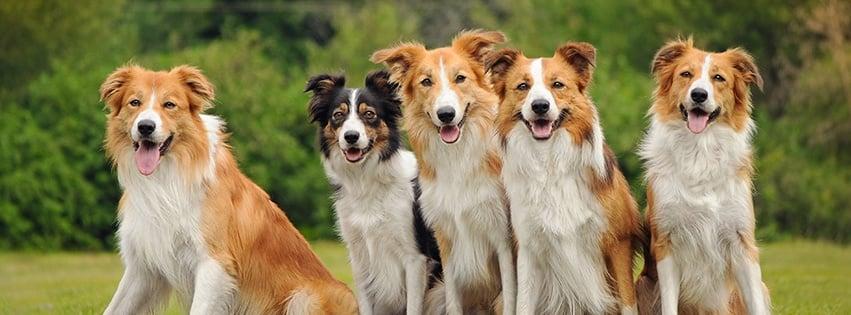 Casey Veterinary Service: 1503 E Main St, Casey, IL