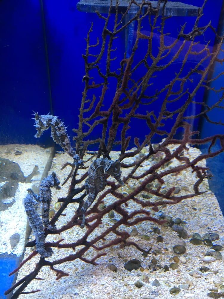 Pesci Reef Fish Emporium