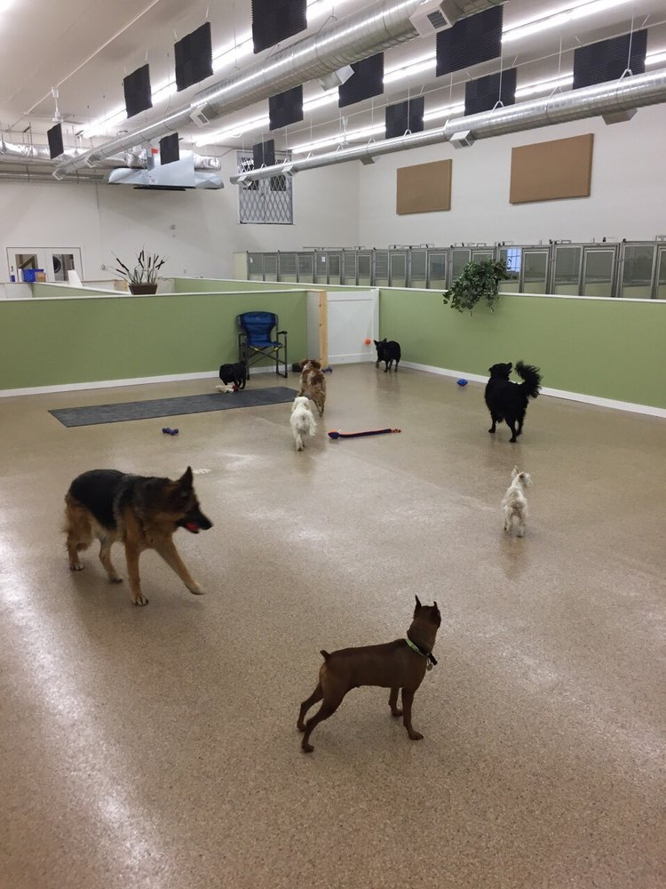 Pampered Pets Boarding and Daycare: 8301 Industrial Park Rd, Baxter, MN