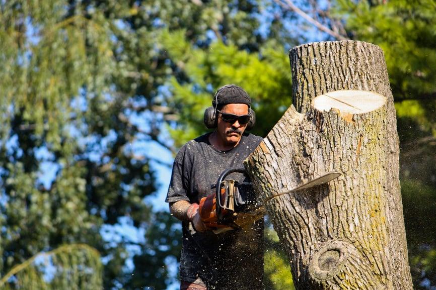 Elkhart Tree Service: Elkhart, IN