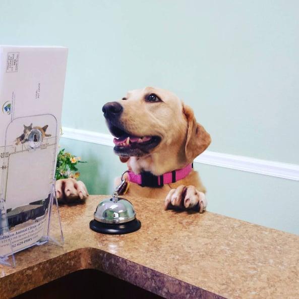 Midtown Animal Clinic of Ocala