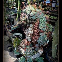 Photo Of Terra Sol Garden Center   Santa Barbara, CA, United States.  Succulent