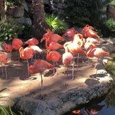 Audubon Zoo - 1456 Photos & 323 Reviews - Aquariums - 6500 Magazine