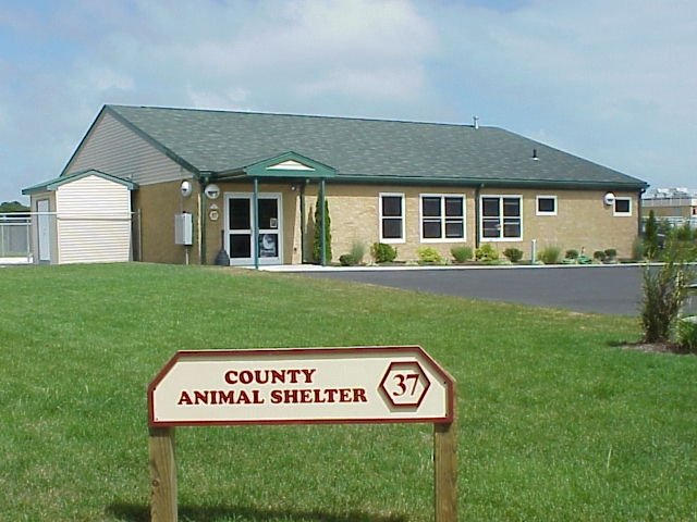 Cape May County Animal Shelter and Adoption Center: 110 Shelter Rd, Middle Township, NJ