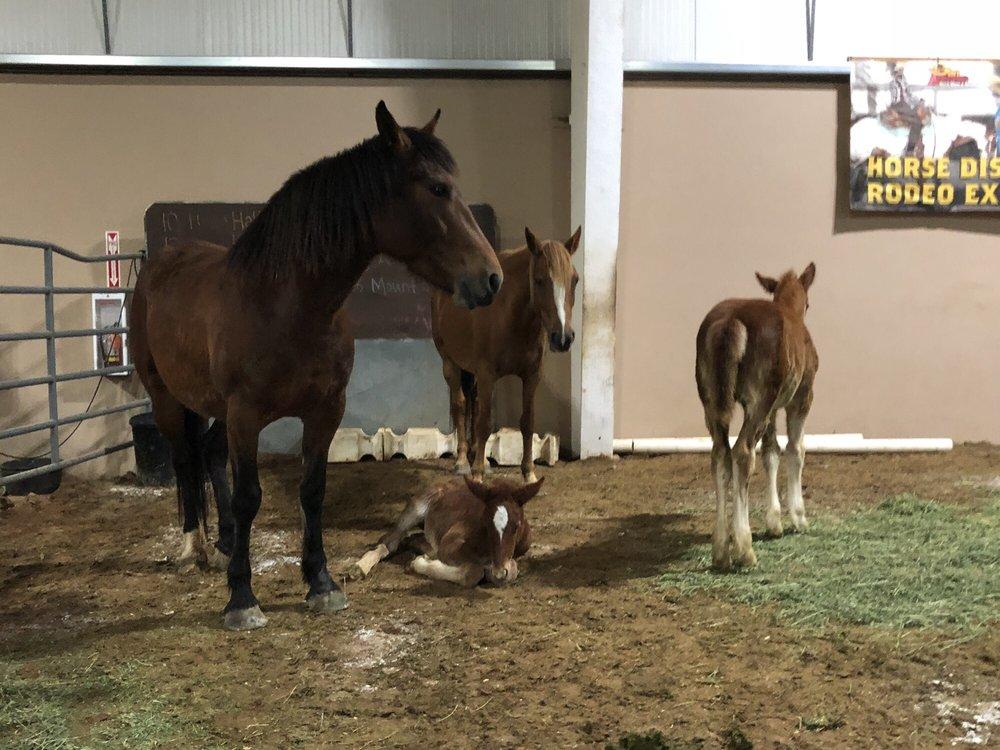 San Antonio Livestock Exposition
