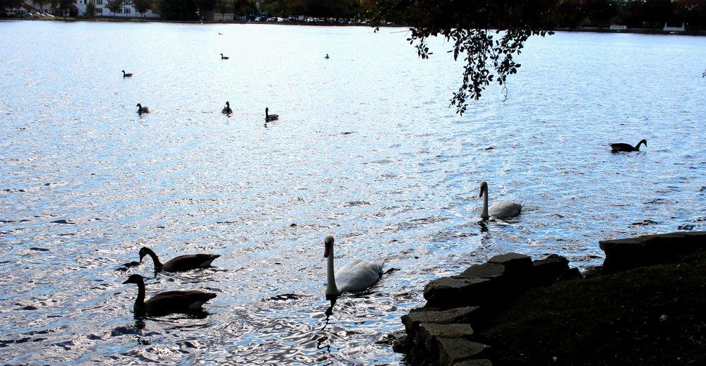 Argyle Park: Hwy 27A, Babylon, NY