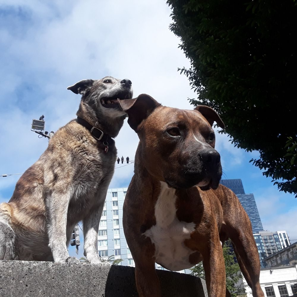 Bark-Buddies Adventures: 2224 2nd Ave, Seattle, WA