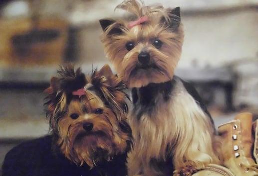 Julie's Pet Grooming: 13382 Apache Trl, Cabazon, CA