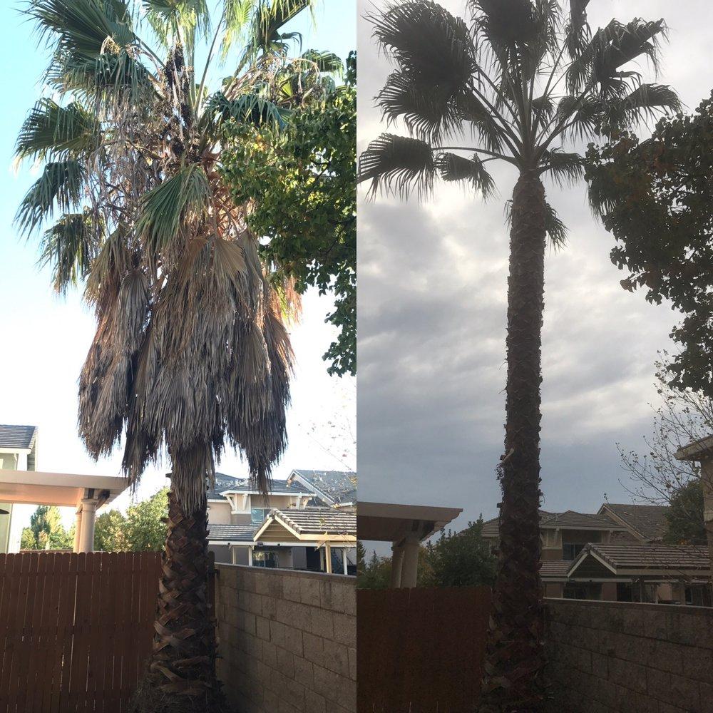 Doug Petersen Tree Service: 4545 Ca Hwy 88, Ione, CA