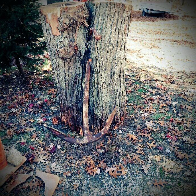 Southern 401 Tree Service: Hopkinton, RI