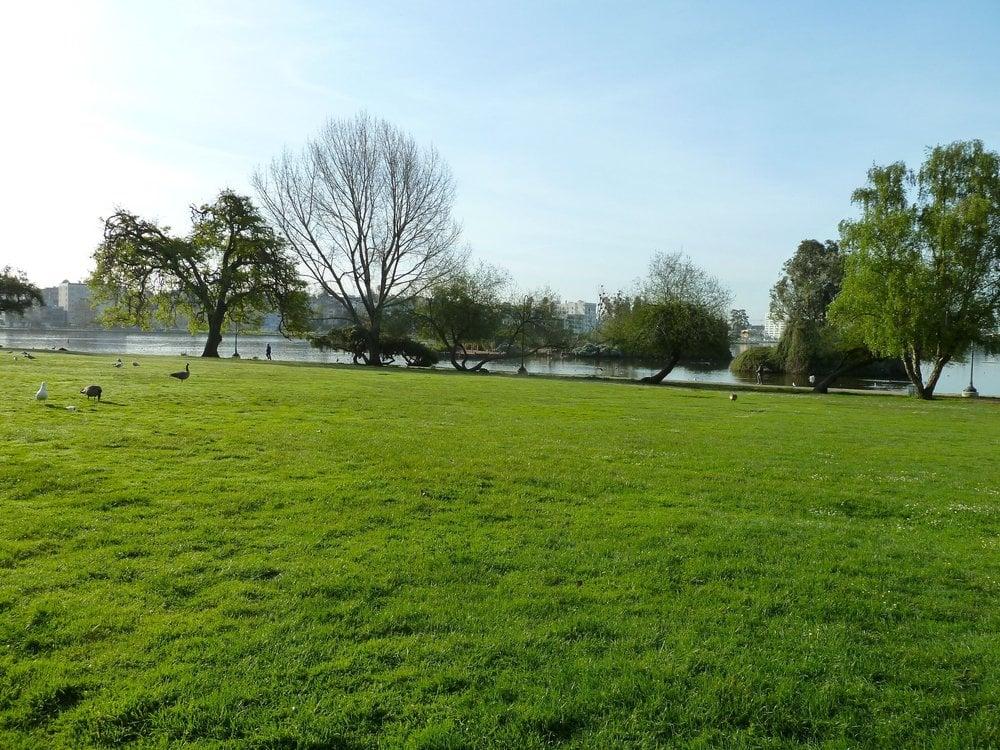 Big Grassy Area Yelp
