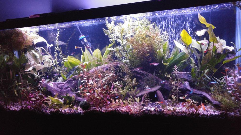 Eddie's Aquarium Centre: 1254 New Loudon Rd, Cohoes, NY