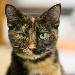 The Cattery - Pet Adoption - 8201 Weber, Corpus Christi, TX