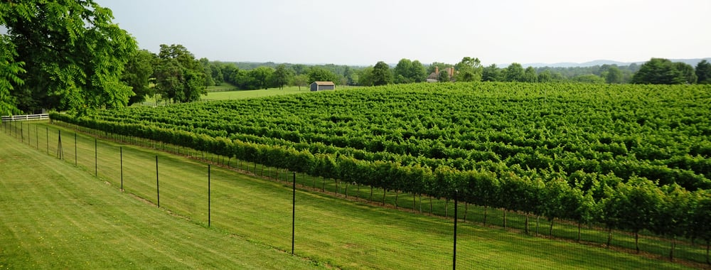 Beautiful vineyard yelp - Grange mobel deutschland ...