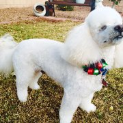 Apache tails pet salon 13 photos 17 reviews pet groomers a touch of class pet grooming solutioingenieria Image collections