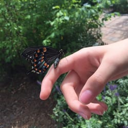 Photo Of Brendau0027s Butterfly Habitat   Garden City, MI, United States