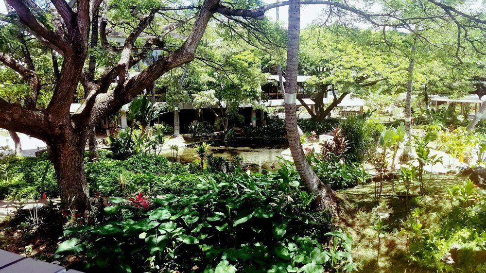 Honolulu Airport Japanese Cultural Garden Giardini Honolulu International Airport Honolulu