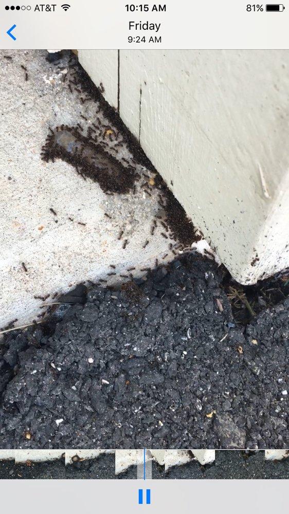 Marriott Termite and Pest Control