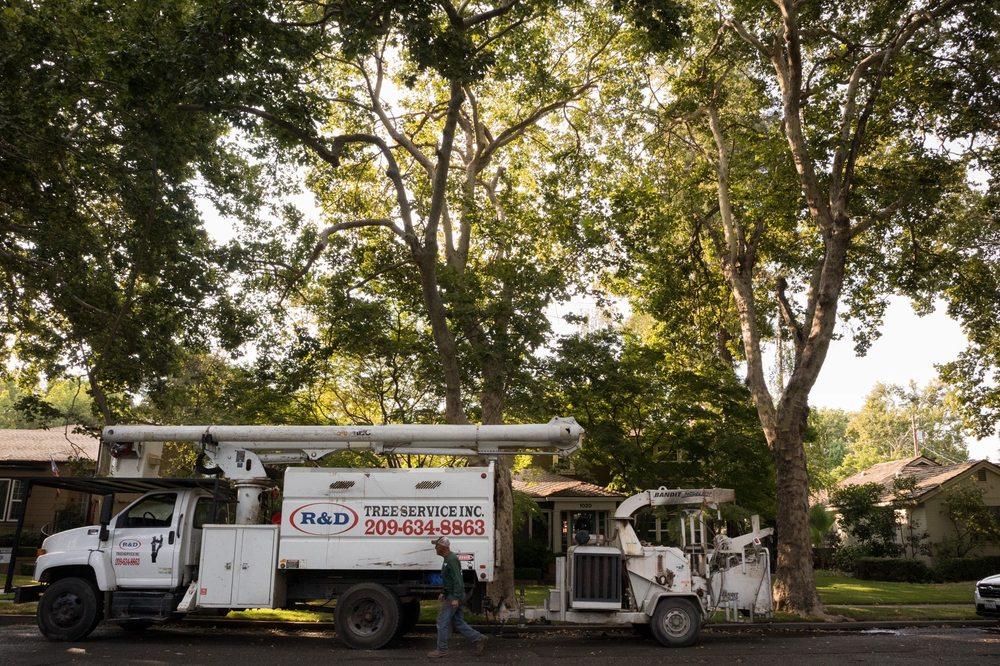 R&D Tree Service: Turlock, CA