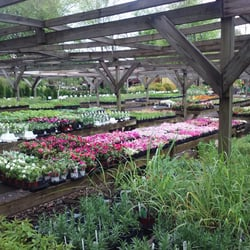 Photo Of Country Nursery Burtonsville Md United States Outdoor Plants