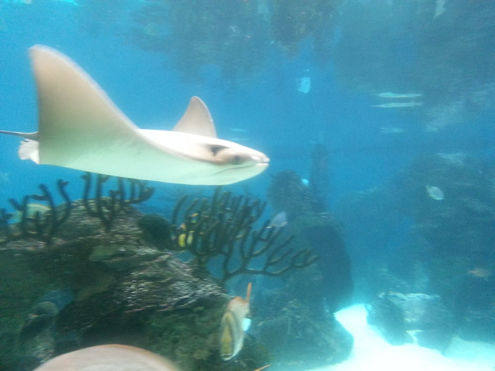 The stingray looks like a fun fish! - Yelp