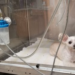 Friendly Animal Hospital - 138 Photos & 541 Reviews