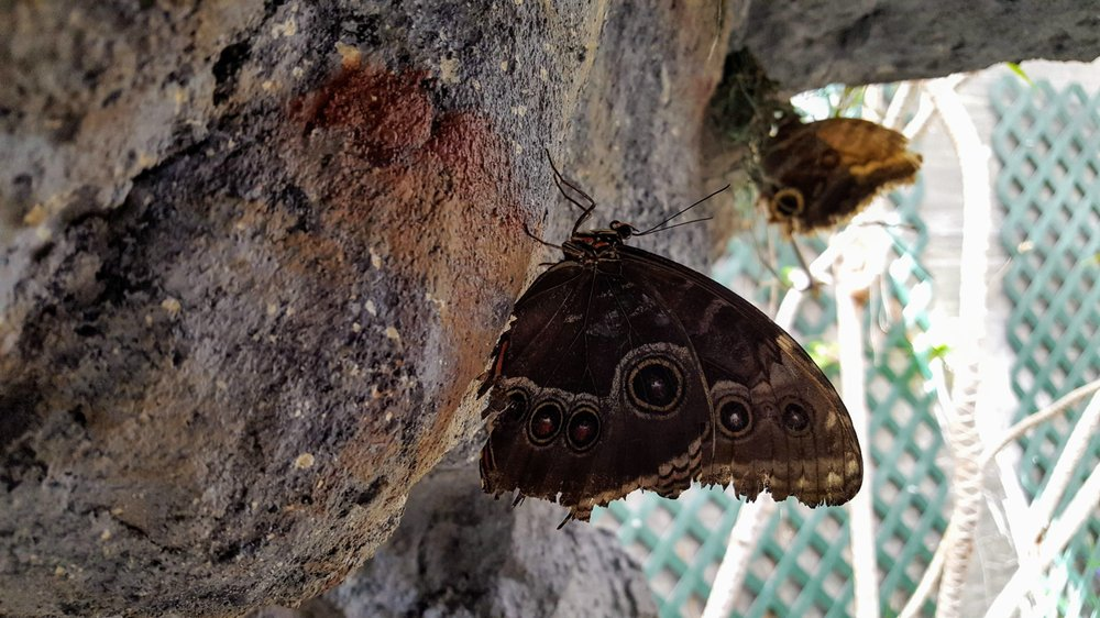 Butterfly House & Aquarium: 4320 S Oxbow Ave, Sioux Falls, SD