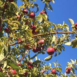 Adams Apple Orchard Farm Market Frugt Og Gr Nt Old Stage Rd Williston Vt Usa