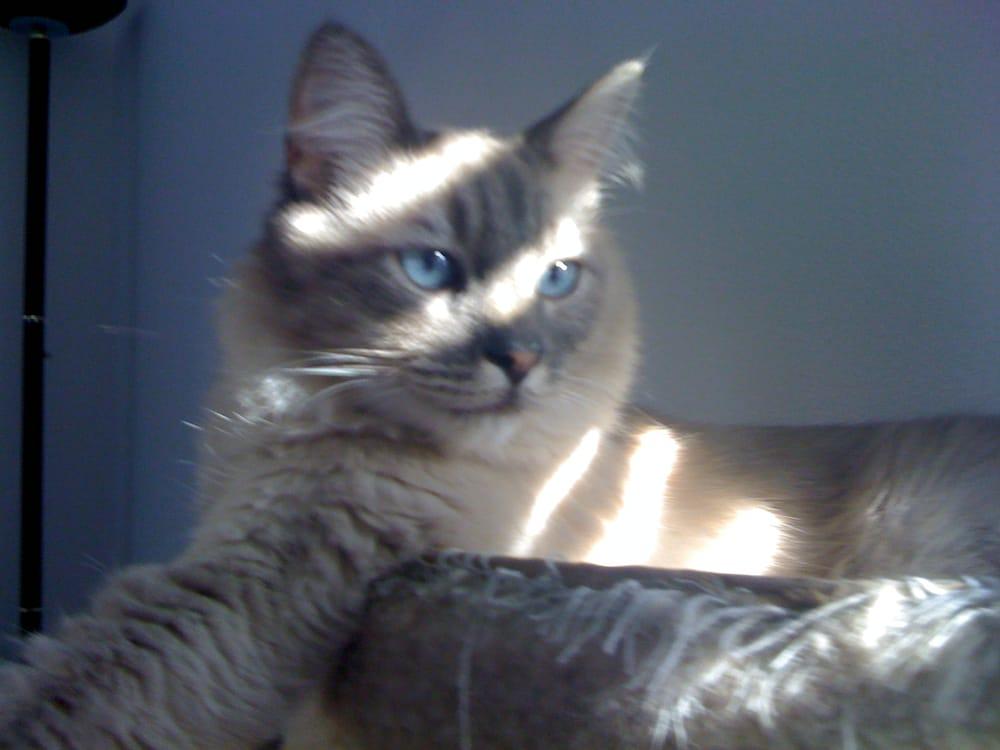 cat hiding in house
