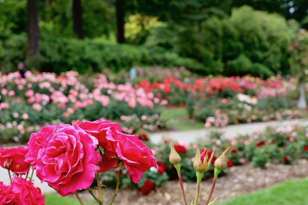Social Spots from International Rose Test Garden