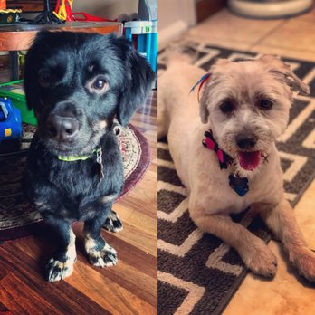 Dog Training Now Schaumburg Reviews