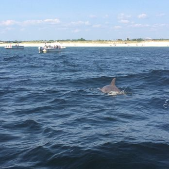 Cheap Dolphin Tours In Panama City Beach