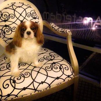 Best Friends Dog Grooming Brooklyn Ny