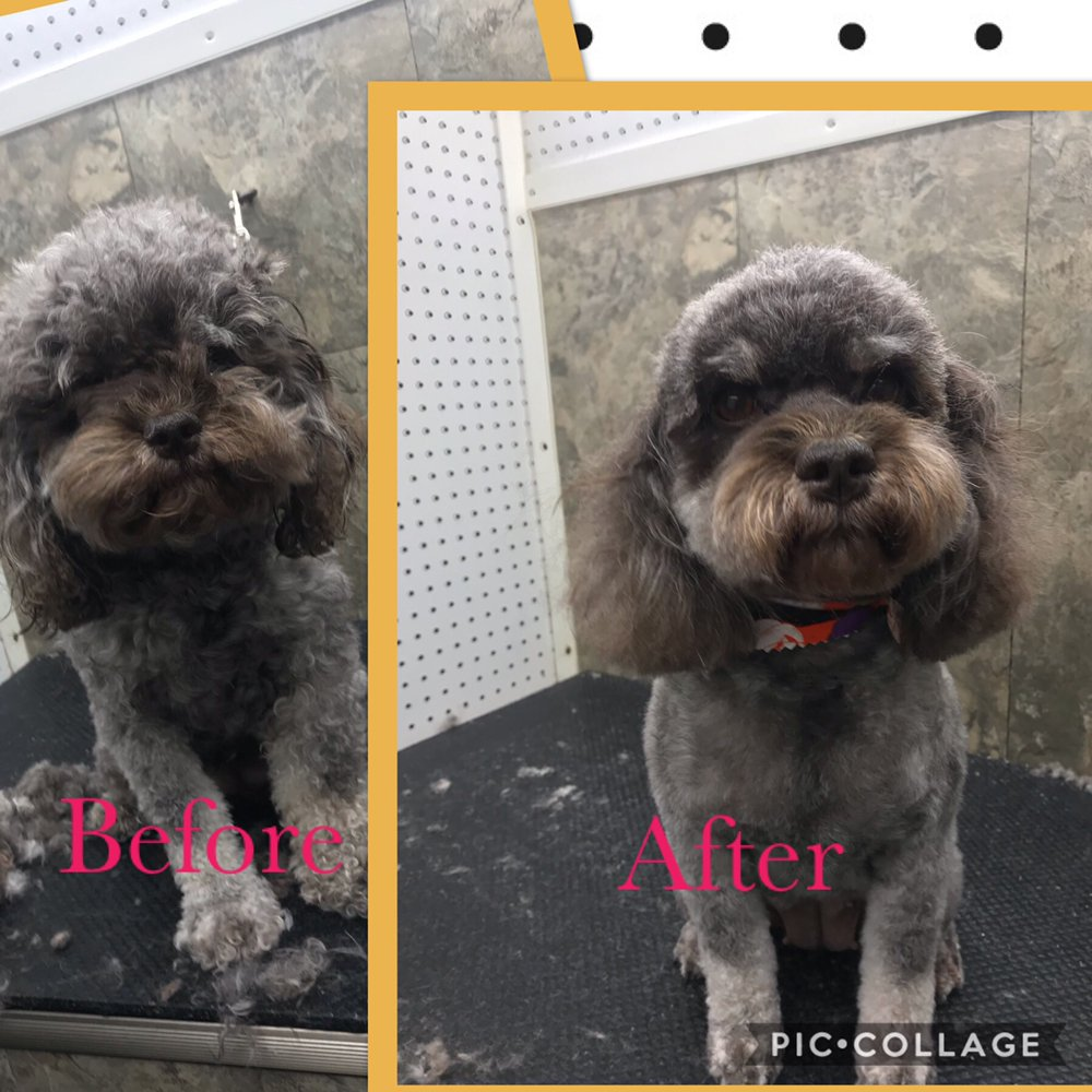 Muddy Mutts Mobile Dog Grooming: Davenport, FL