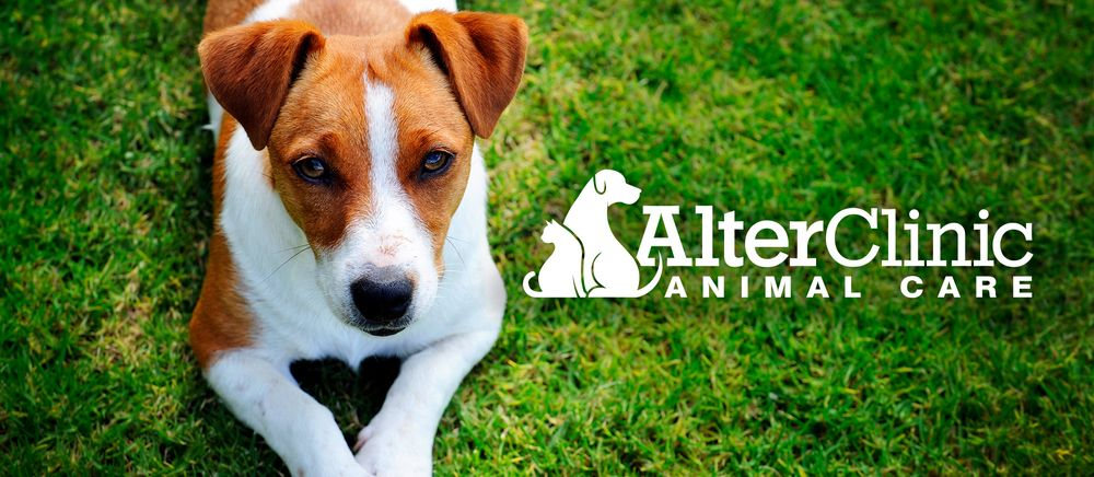 AlterClinic Animal Care: 2302 Fulton Rd NW, Canton, OH