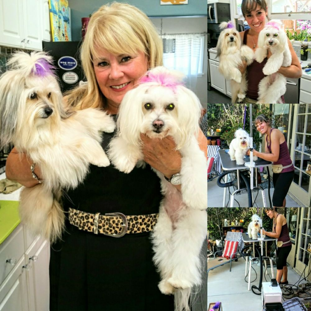 Dog Gone Great Grooming & Nails