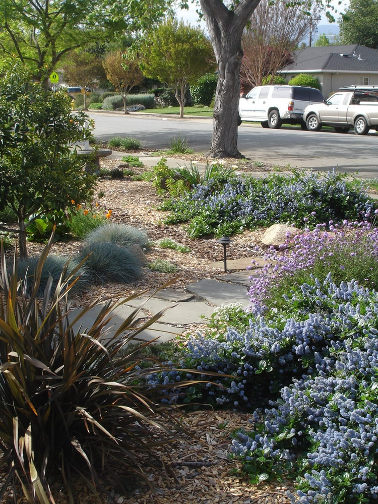 Mostly california native plants garden in willow glen California native plants for the garden