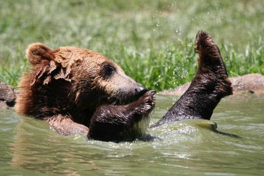 Hollywild Animal Park - Temp. CLOSED - 29 Photos & 13 Reviews ...