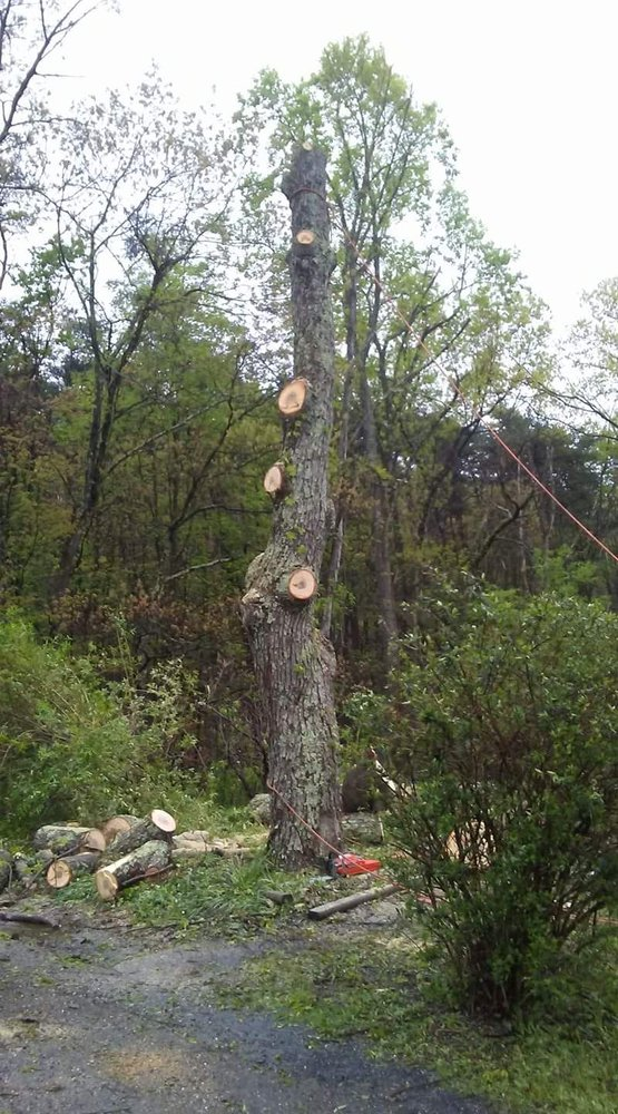 Good Roots Arbor Care: Berkeley Springs, WV