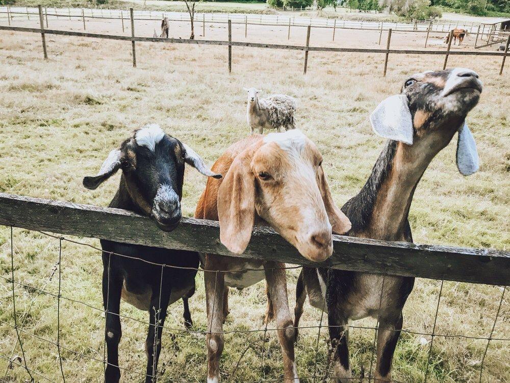 Pomeroy Farm: 20902 NE Lucia Falls Rd, Yacolt, WA