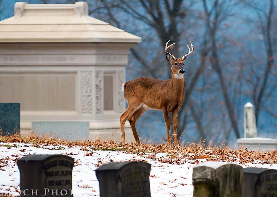Finger Lakes Monument: 3740 State Rte # 5 & 20, Canandaigua, NY