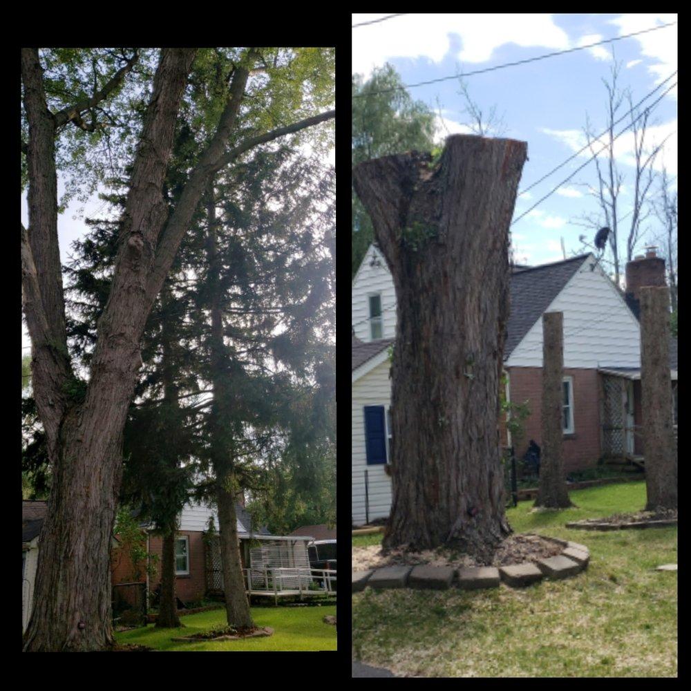 Cutting Edge Tree Service: 8017 Mill Rd, Gasport, NY