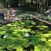 Kanapaha Botanical Gardens Carnivorous Plants Gainesville Fl