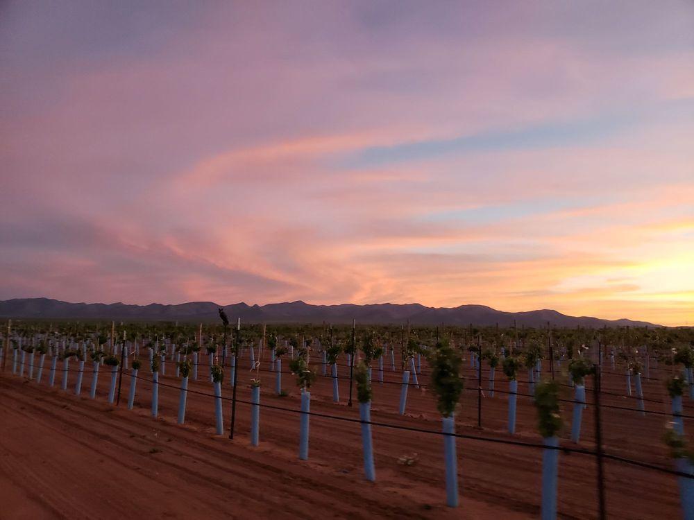 Hofmann Vineyards: 9399 N High Lonesome Rd, McNeal, AZ