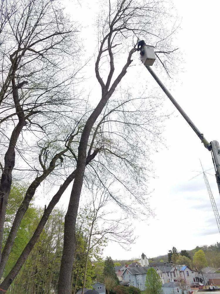 Emery Tree Service of PA: Saltsburg, PA