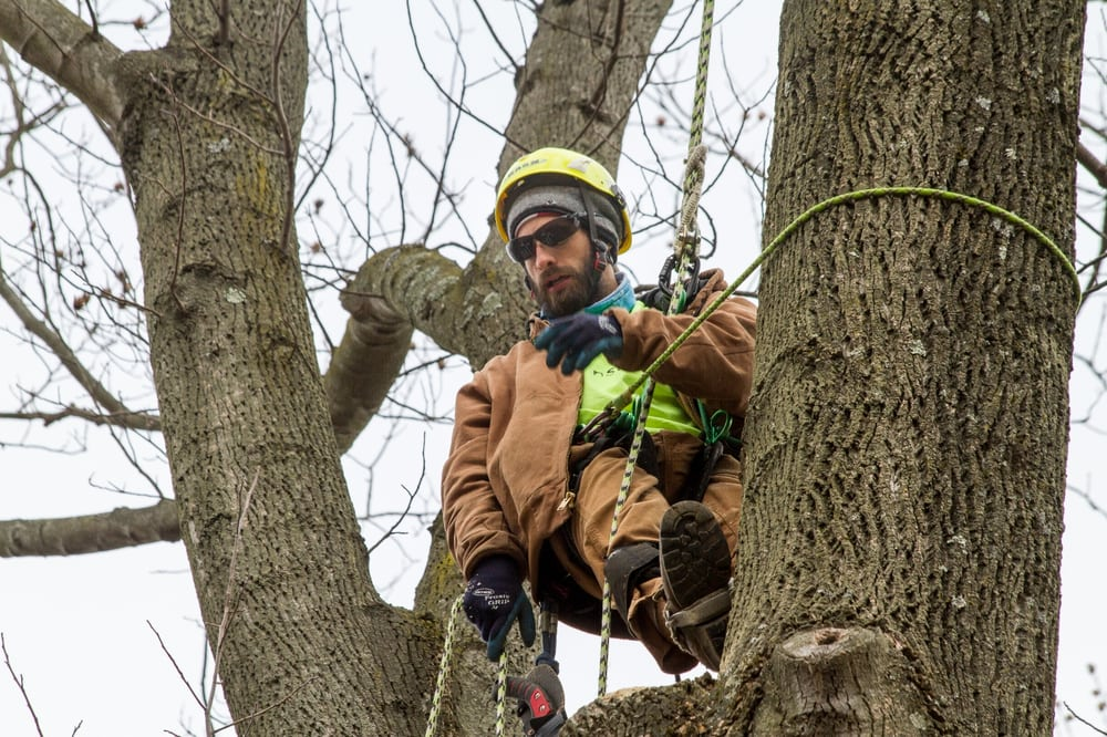 Monster Tree Service Chester County: Pottstown, PA