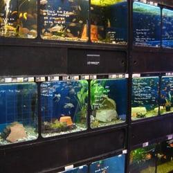 Pets wonderful pet stores 609 church street church for Fish store reno