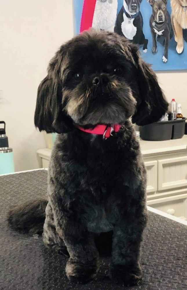 Seaside Pet Spa: 50 Country Way, Scituate, MA