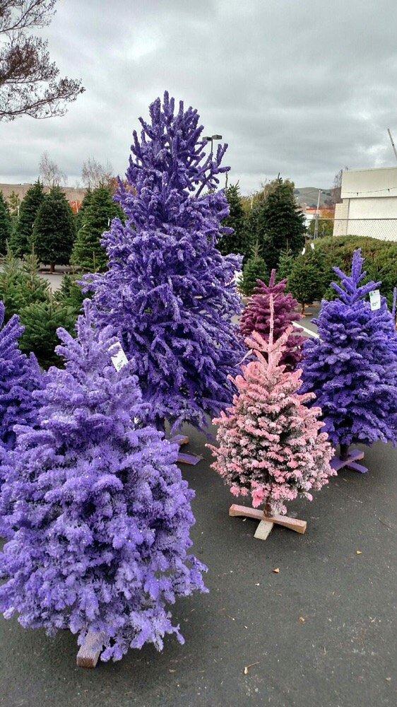Morning Glory Farm Christmas Trees