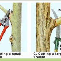 Photo Of Hairy Beaver Tree Service Leander Tx United States
